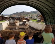Bauernhof Nüeltschehof