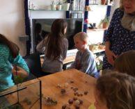 Natur- und Vogelschutzverein Mellingen 2019